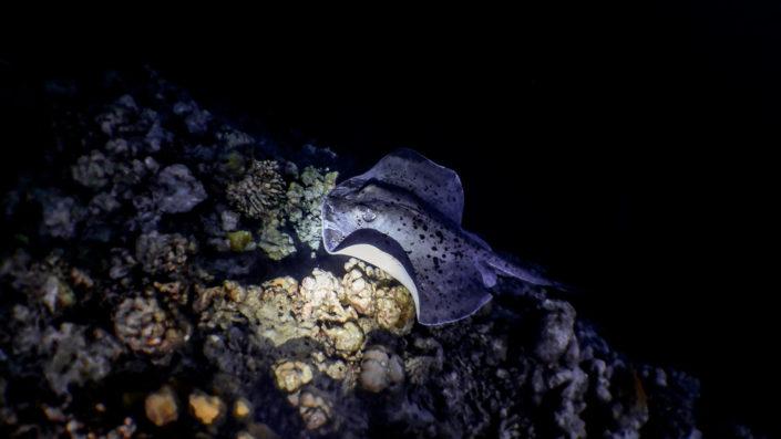 Night Snorkelling Maldives