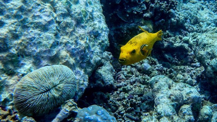 Snorkelling Diving Maldives